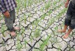 انتقال کشاورزی از فضای باز به گلخانه راه مبارزه با کمآبی است
