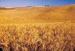 دستورالعمل های موسسه دیم کشور در زمینه غلات، حبوبات، علوفه و دانه های روغنی