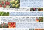 بروشور های تهیه شده در بخش تحقیقات ثبت و گواهی بذر و نهال