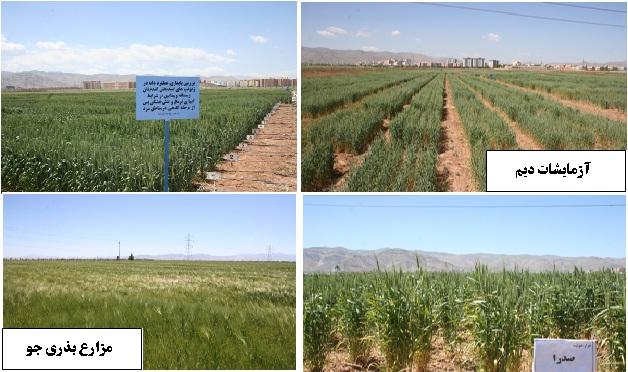 طرحهای تحقیقاتی و مزارع پرورشی غلات آبی و دیم در ایستگاه تحقیقات اراک